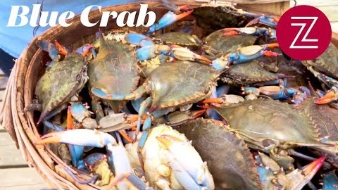 Seafood at the Source: Chesapeake Bay Blue Crab
